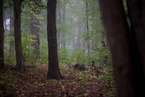 Forest background stock by Snowenne