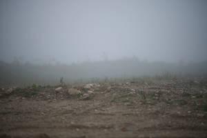 Foggy Dirt Stock