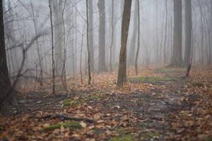 Free Foggy Forest Stock by Snowenne