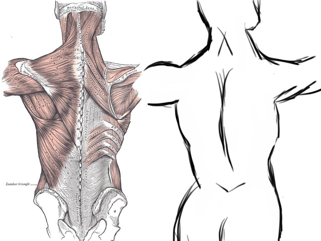 Výsledek obrázku pro back