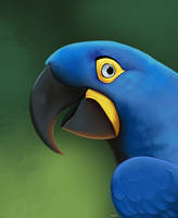 Hyacinth Macaw by Pinfires