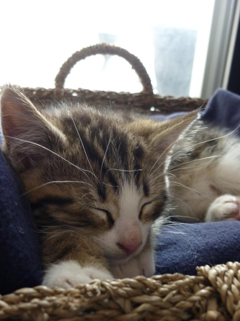 Sleepy Squall by EraserRain27