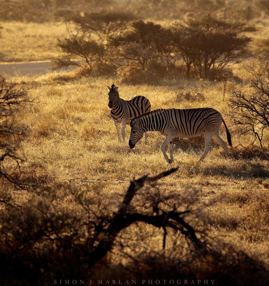 Stripes at dusk by Darth-Marlan