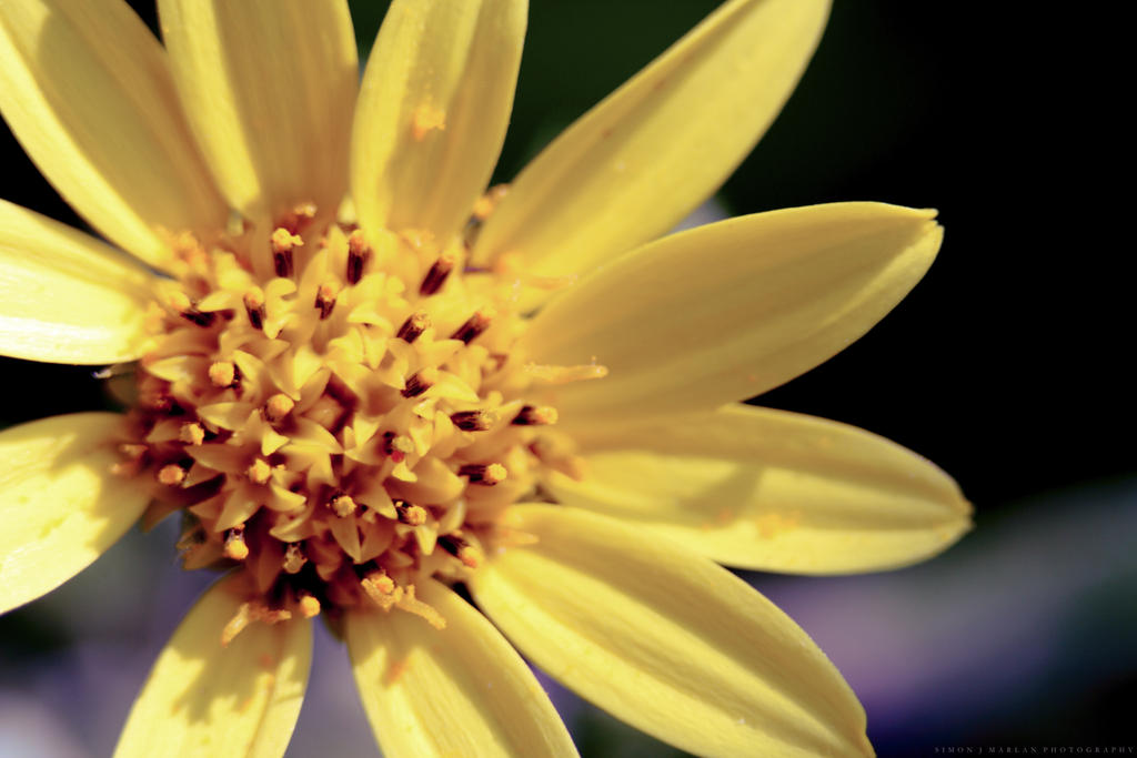 Yellow by Darth-Marlan