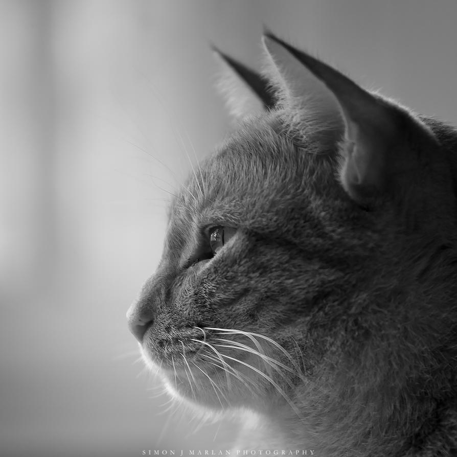 ..Whiskers.. by Darth-Marlan