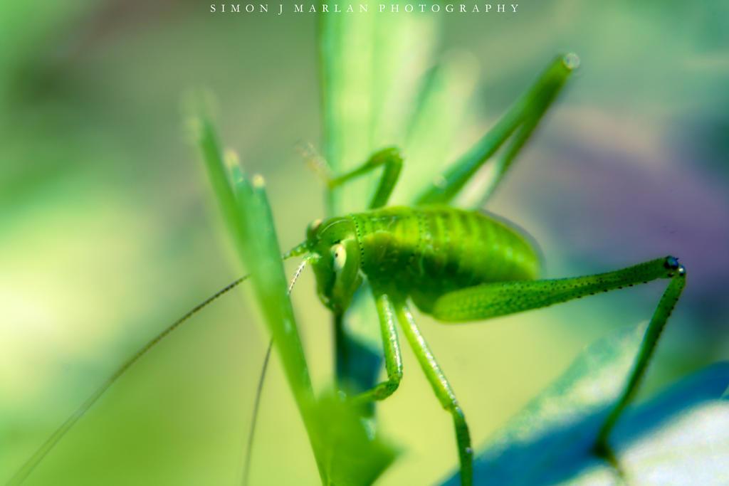 Green on green by Darth-Marlan