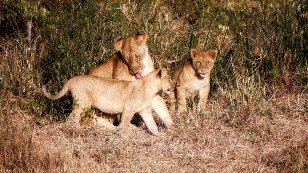 Walk-thru lion cub wash by Darth-Marlan