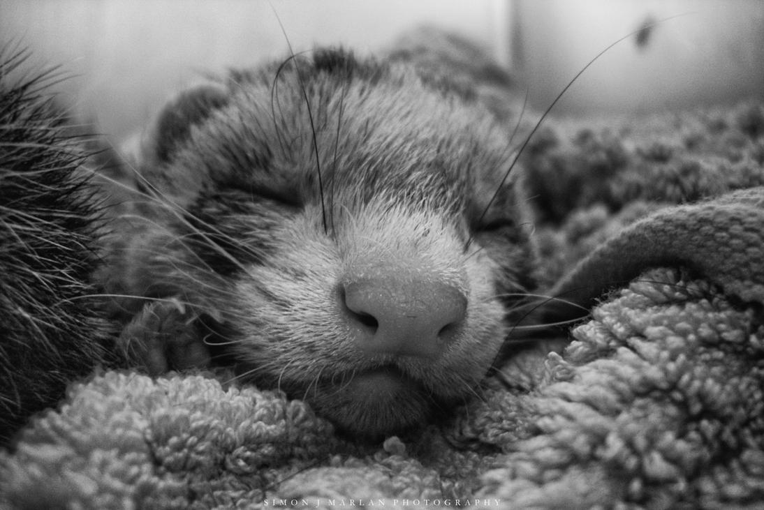 Sleepy by Darth-Marlan