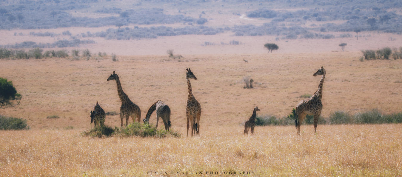 ..and an antelope by Darth-Marlan