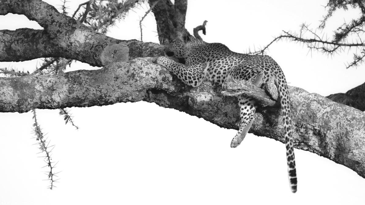 Nap time by Darth-Marlan