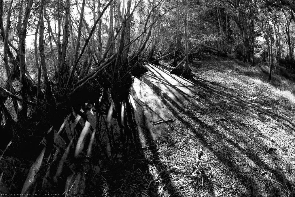 Beaming lines by Darth-Marlan