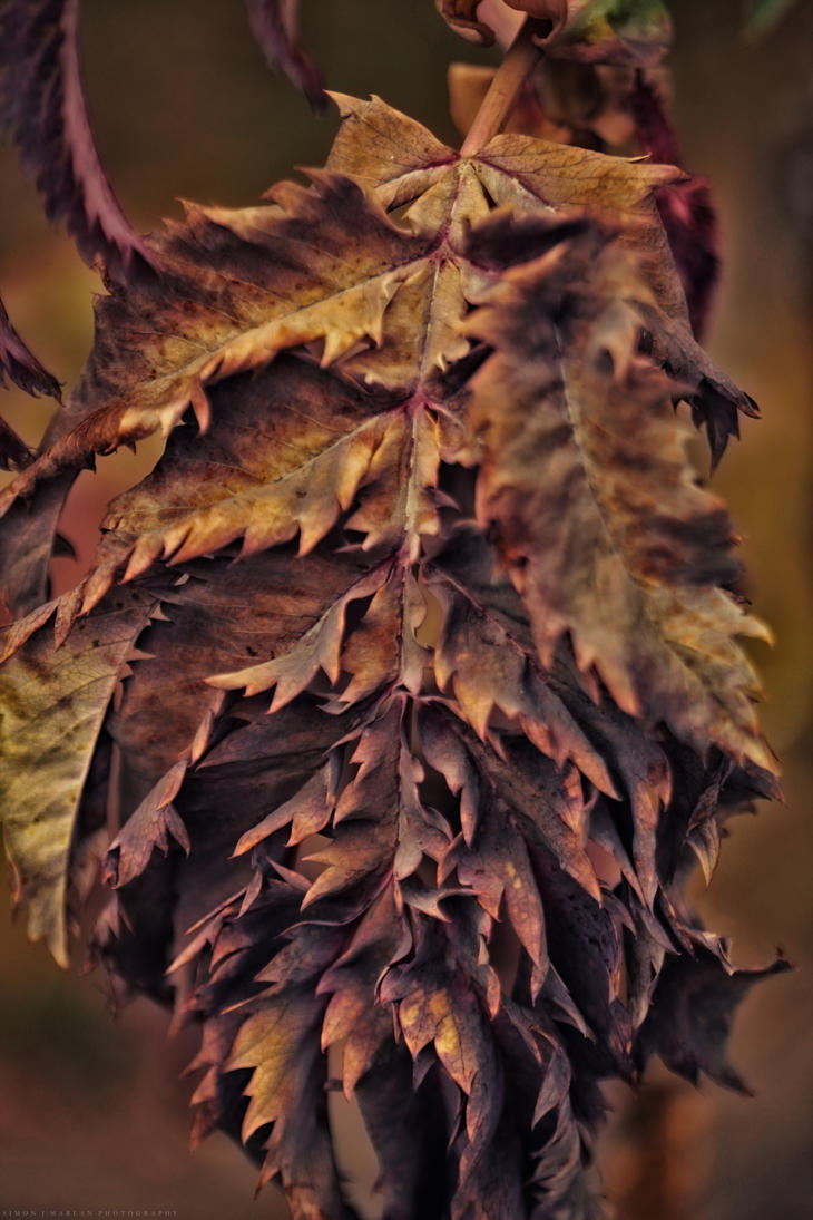 Change of season by Darth-Marlan