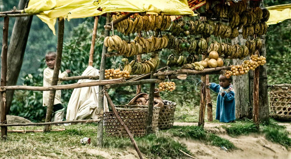 Fruit by Darth-Marlan