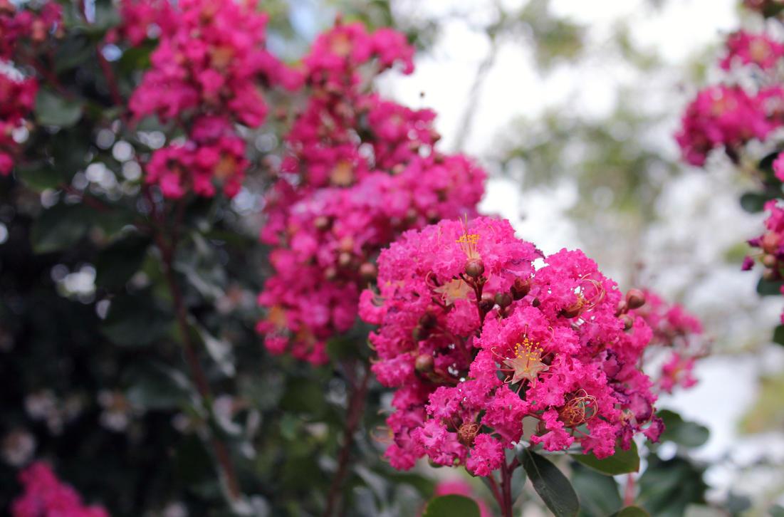 Pretty Pink Flowers By Jasbones On Deviantart