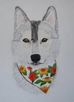 <b>Dog  4  - Siberian Husky</b><br><i>MoonTrizer</i>