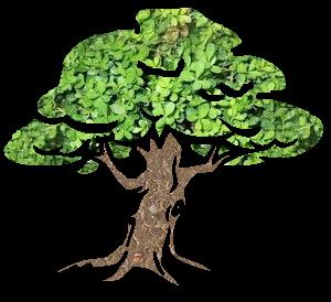 Tree by Jadelang