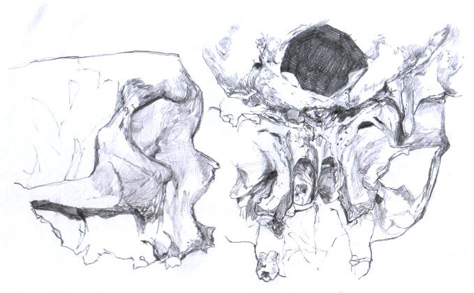 skull_study_5_by_dclaudiob.jpg