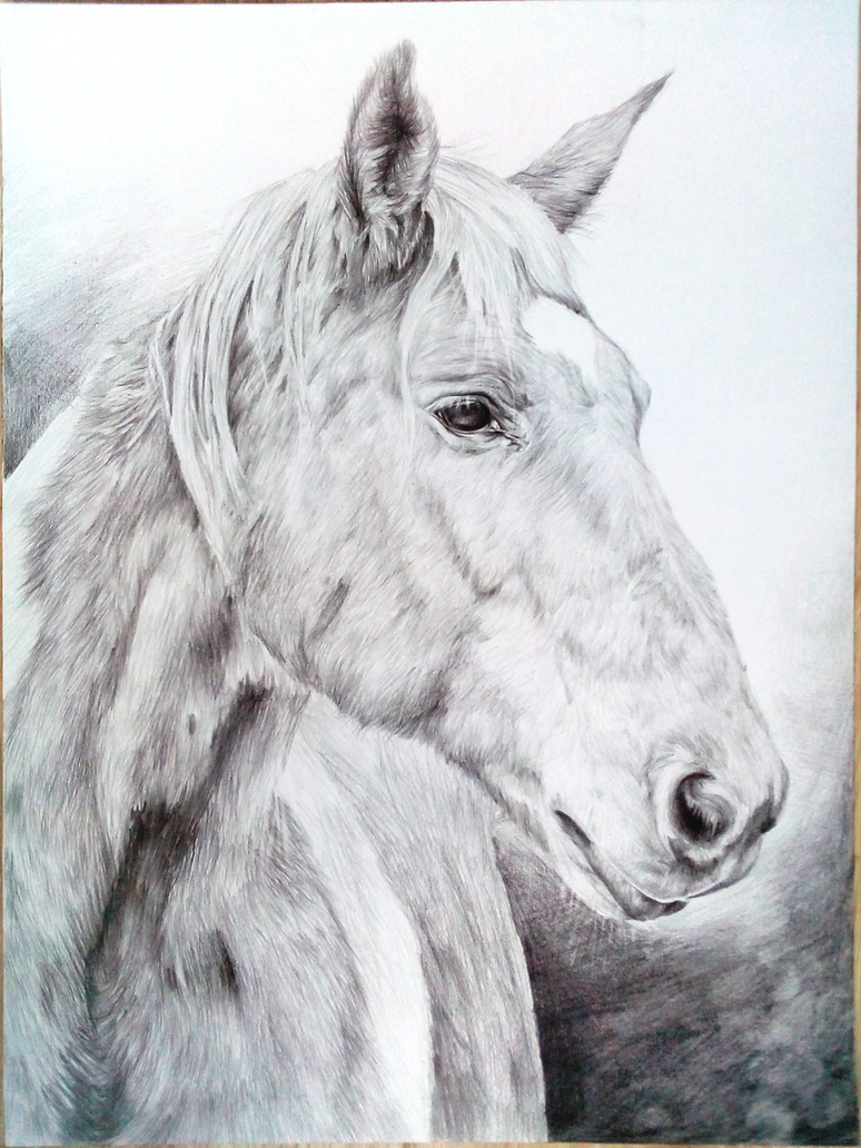 Horse_02 by Eshaerg