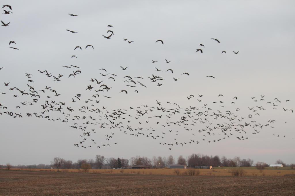 Sky Geese by ParkaarJay
