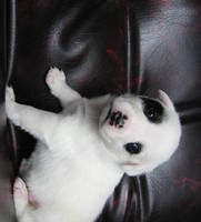 Puppy Poser by JupiterThunder