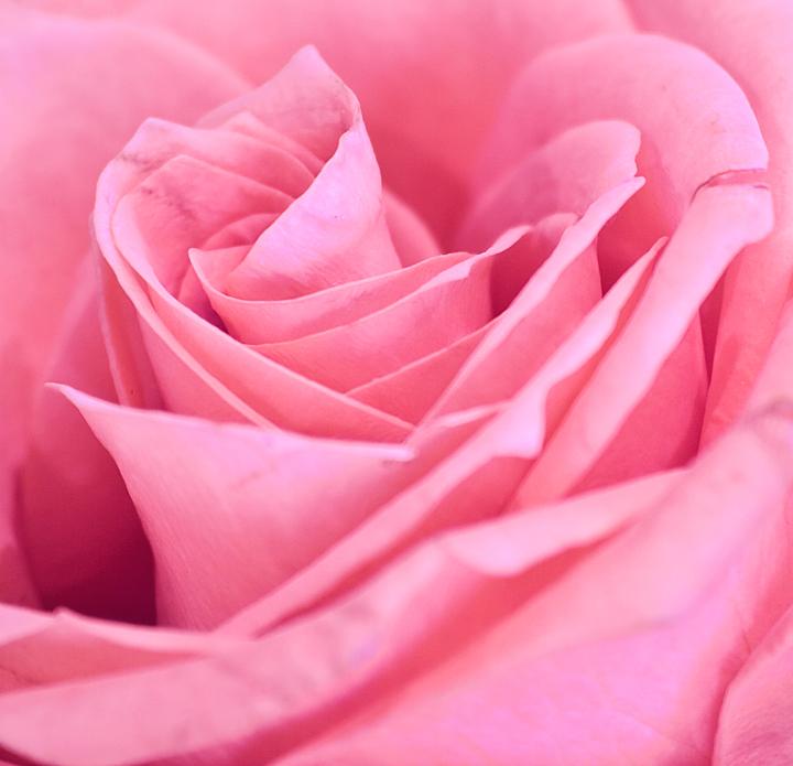 pink pussy closeup