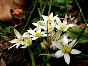 flowers by damdakisuvari