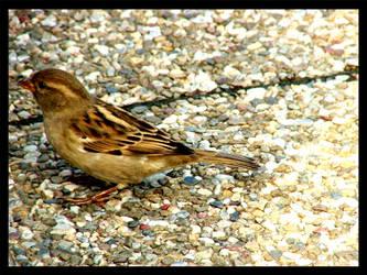 bird by damdakisuvari