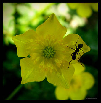 yellow flower and the ant