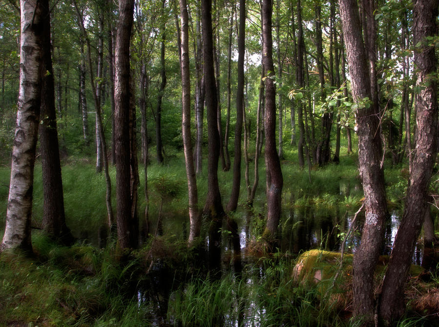In the forest by RavensLane
