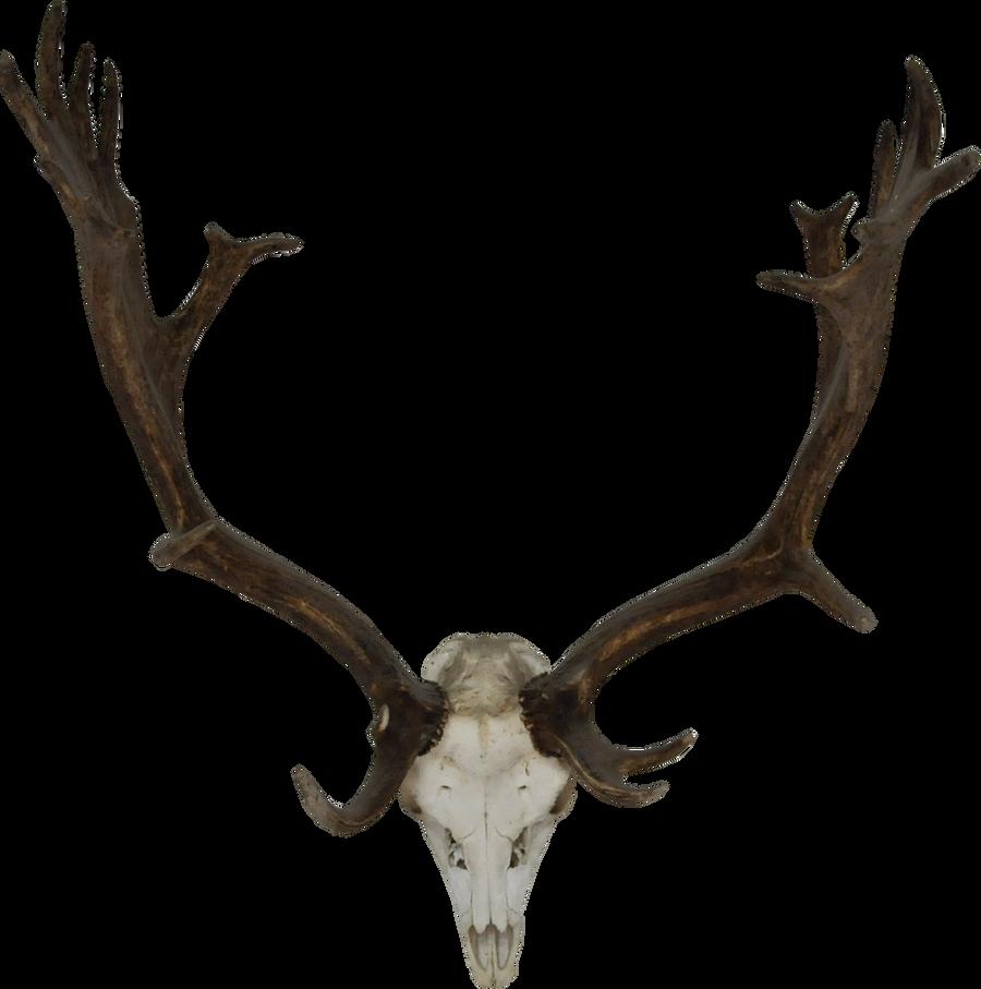 Real reindeer antlers - photo#5