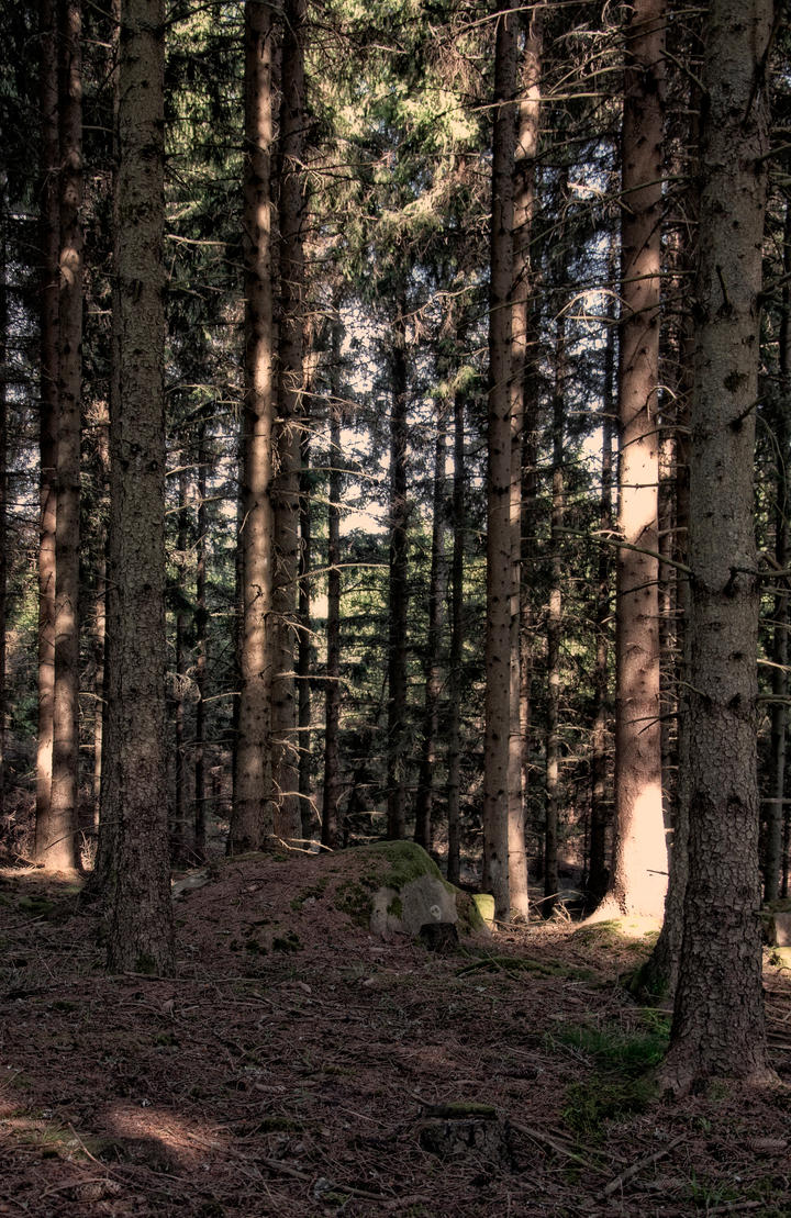 Forest by RavensLane