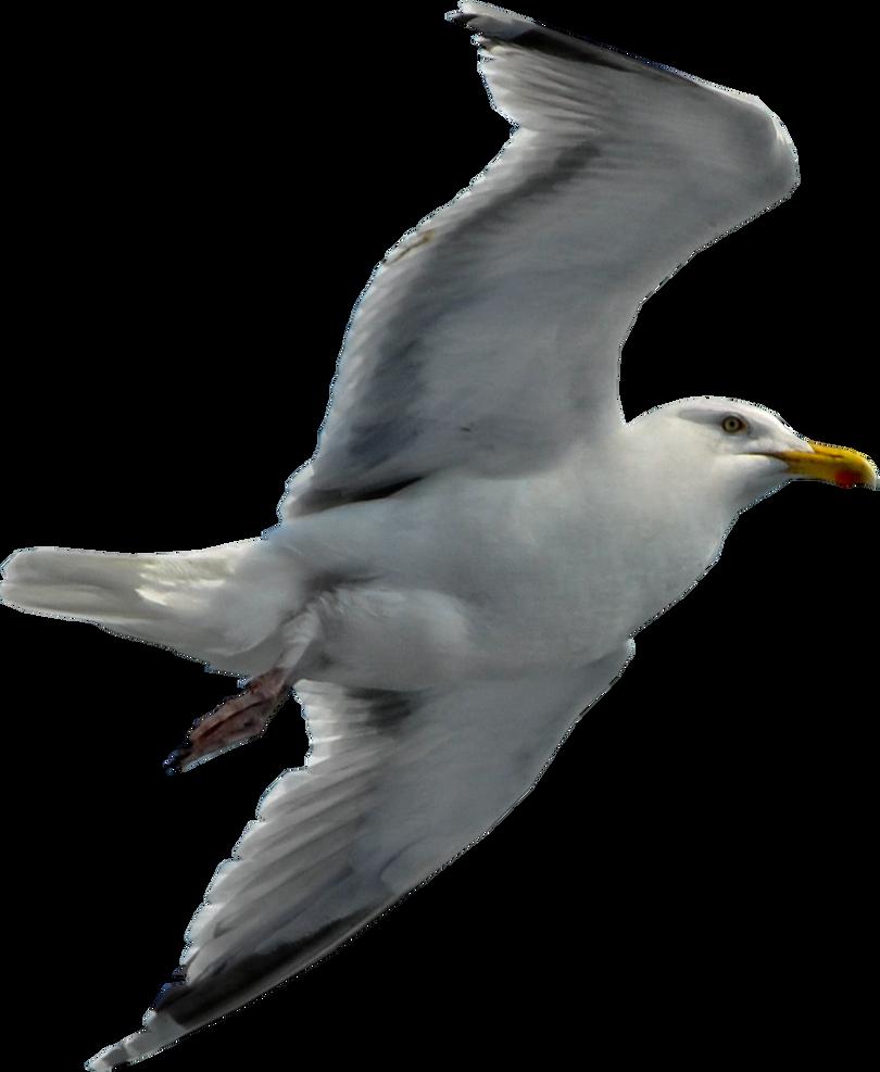 Seagull by RavensLane