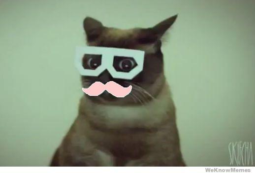 Кот в бумажных очках
