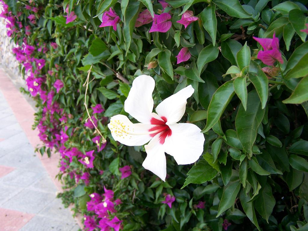 100 4031 Flowers in Andalucia by fueledbyfreestock on deviantART