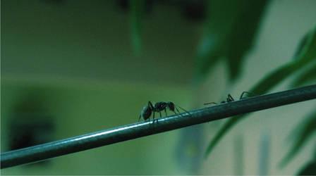 love Ant no stranger