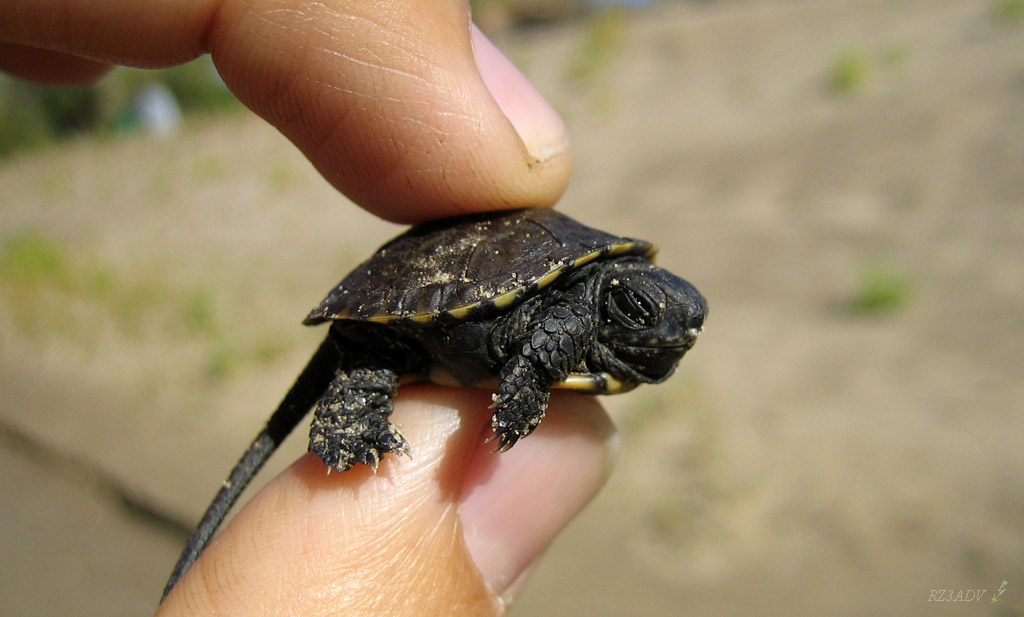 Small Turtle Related Keywords & Suggestions - Small Turtle Long Tail ...