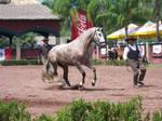 Horse Stock 1