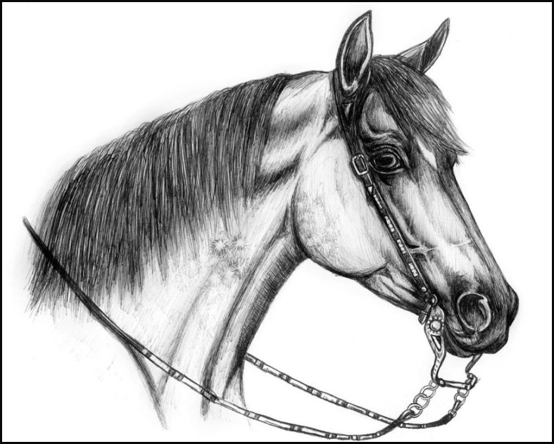 Quarter horse drawing - photo#17
