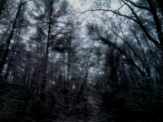 And Silent Woods Remain