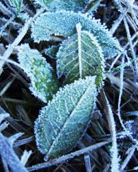 Frozen Leaves by Ellrohir