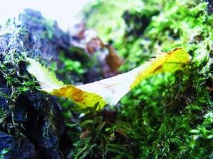Last Autumnal Leaf