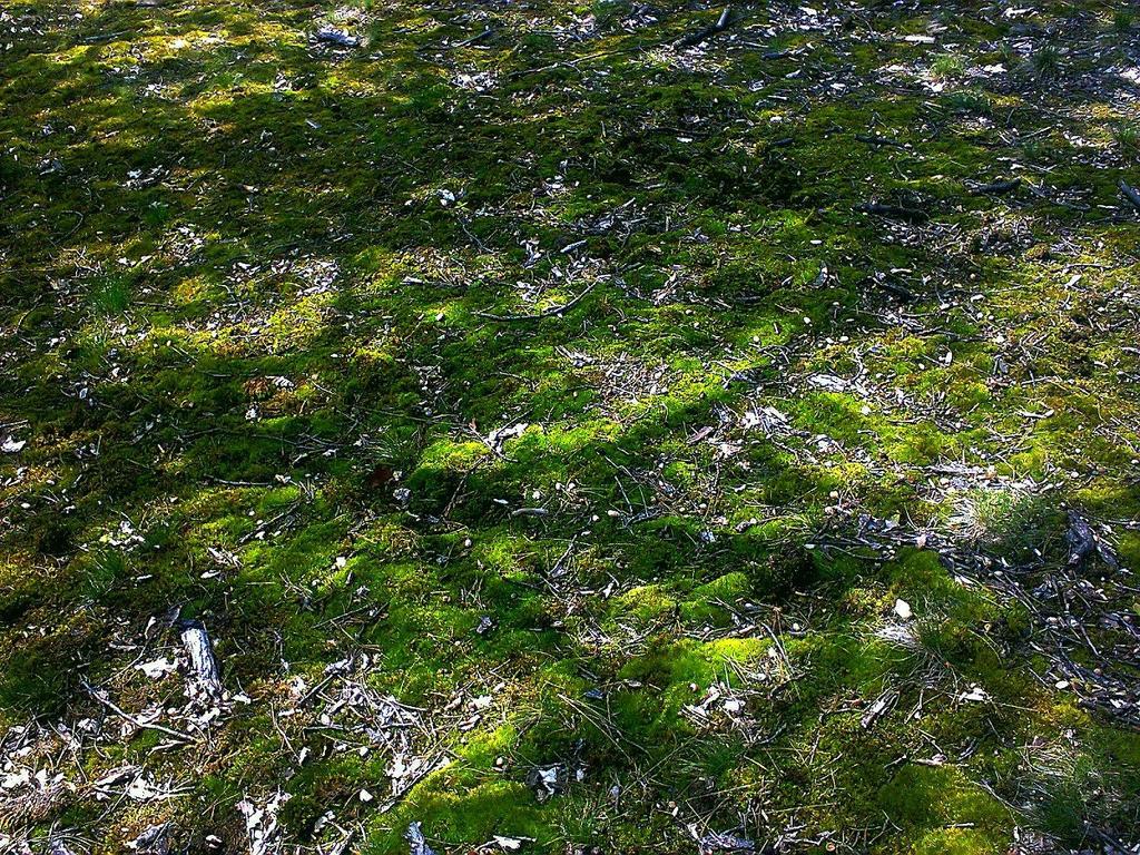Forest moss by Ellrohir