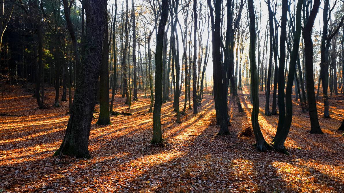 Autumnal Light by Ellrohir