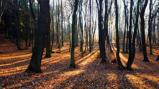 Autumnal Light