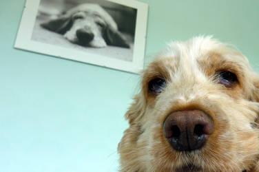 Dog and Dog