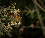 Jaguar: STEALTH
