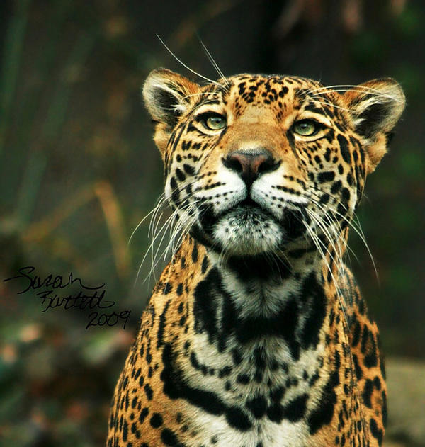 Queen of the Jungle by NaturePunk