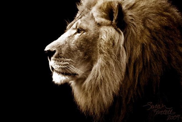Lord Leo by NaturePunk