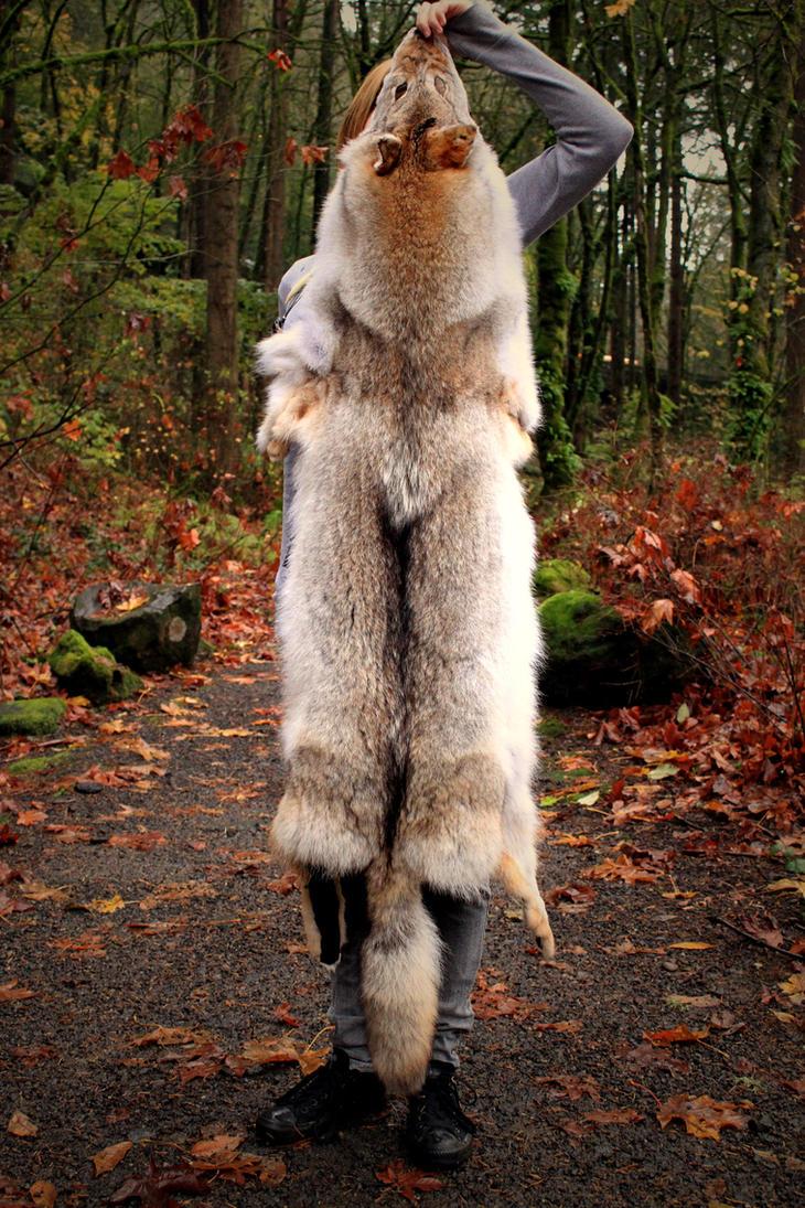 Gray Wolf Skin Headdress Full By Naturepunk On Deviantart