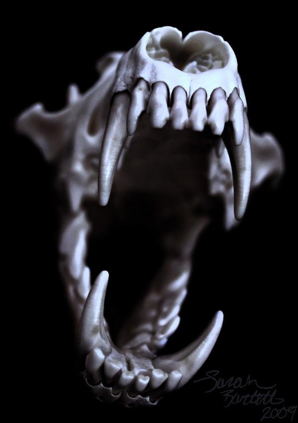 coyote skull tattoo